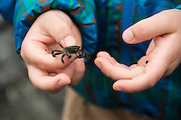Close-up of toddler boy's hands holding a tiny crab found in a tidepool at Patrick's Point State Park, California.