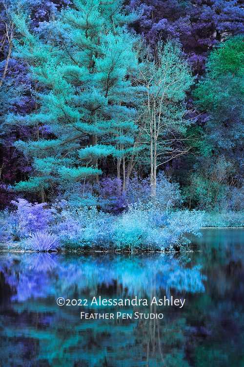 Woodland pond with autumn foliage and evergreens, indigo color toning and soft glow effects.
