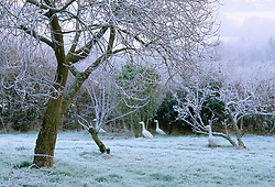 The orchard at Ketley's in winter with stone ducks. Design Helen Yemm
