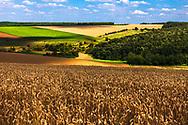 Dobrudzha region at summer time