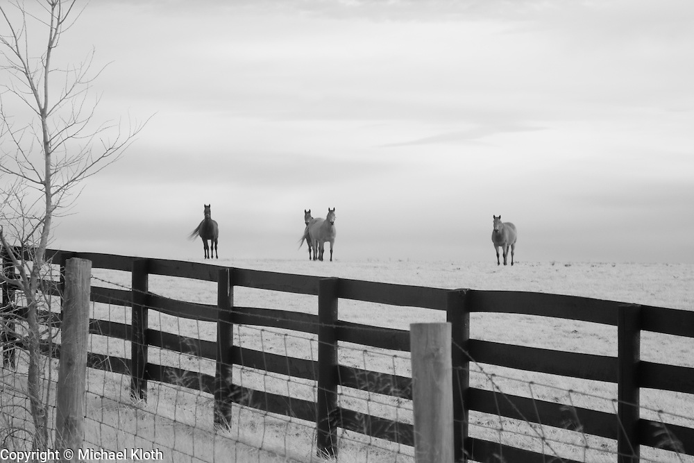 Infrared (IR) image - These horses were photographed as part of a series I did on Kentucky horse farms.  The day was overcast and I think that gives the image a nice softness.  The prominent leading lines of the four plank fence (common for the area) provide needed contrast to the image.