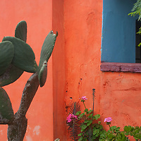 A cactus and flowers sprout from a garden outside a house in the Miraflores district of Lima, Peru.