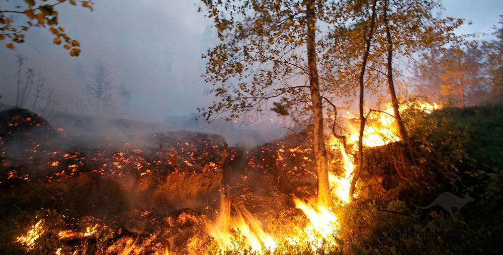 Froland 20080610: Skogbrannen i Froland spredte seg tirsdag; bildet viser flammer langsmed riksvei 42 vest for Mykland tirsdag kveld.<br /> Foto: Tor Erik Schrøder / Scanpix