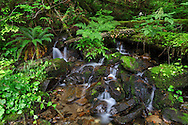 Several very small waterfalls along a creek running into the north side of Hicks Lake in Sasquatch Provincial Park, Harrison Hot Springs, British Columbia, Canada