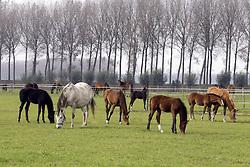 Merrie met veulen<br /> Stal Hulsterlo - Meerdonk 2002<br /> © Dirk Caremans