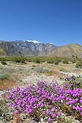 San Jacinto Mountains Desert Landscape