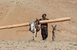 ANBAR SOMUCH, AFGHANISTAN, AUGUST 1, 2002: Ali Juma and a relative carry wood on donkeys that will be used to rebuild their destroyed home in the village of Anbar Somuch,  Afghanistan, July 31, 2002. More than 100 families have returned to their village after the fall of the Taliban and they are rushing to rebuild their homes before the brutal winter sets in. (Photo by Ami Vitale)