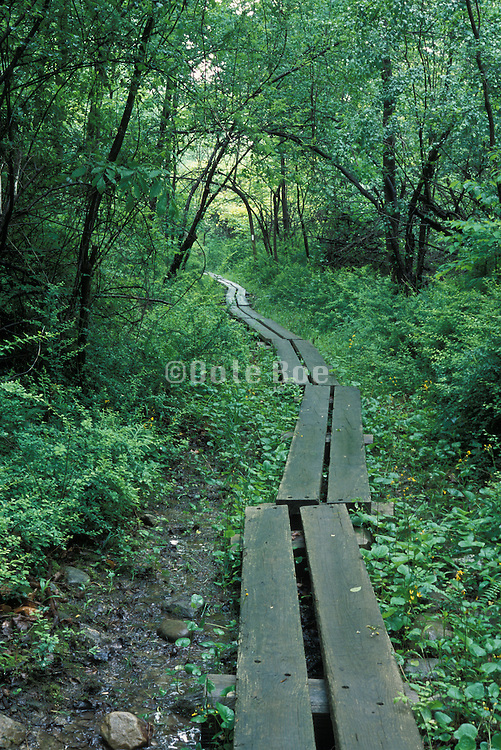a planked muddy pathway in the woods