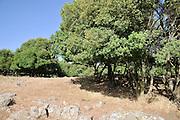Odem Forest, Golan Heights, Israel