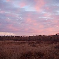 A sedge marsh in Superior National Forest adjacent the Boundary Waters Canoe Area Wilderness near Ely, MN. This is a typical wetland landscape for this area and it is part of the BWCAW watershed.