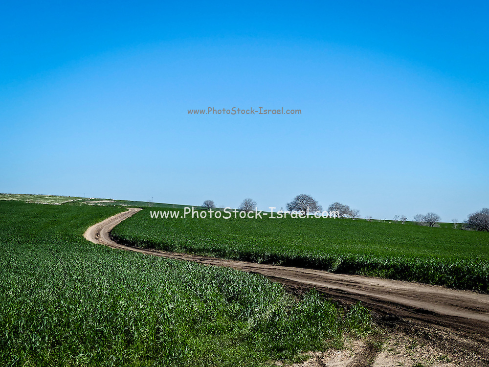 Green field and blue sky. Photographed in Arizona USA