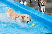 DRUNEN  Moos in het Run. Einde van het zwemseizoen