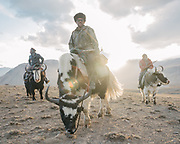 """Sidol (left), Jumagul (Center) and Assan Khan (Right). Men returning on their yaks after cutting fodder. Life in Baiqara, a Wakhi High pasture inhabited for about 6 months of the year, from May until October. Guiding and photographing Paul Salopek while trekking with 2 donkeys across the """"Roof of the World"""", through the Afghan Pamir and Hindukush mountains, into Pakistan and the Karakoram mountains of the Greater Western Himalaya."""