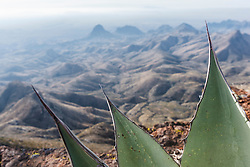 Century Plant and view from South Rim of Chisos Mountains into Mexico, Big Bend National Park, Texas, USA.