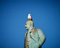Gull on top of a statue in Bergen, Norway. Image taken with a Nikon N1V2 camera and 10-110 mm VR lens (ISO 200, 110 mm, f/5.6, 1/640 sec).