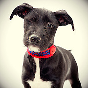 Black and white terrier winks. ©Anne Chadwick Williams
