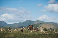 Horses graze on a hill near Trinidad, Cuba. (December 6, 2014)