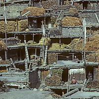NEPAL, HIMALAYA.  Braga village in Manang Valley, north of Annapurna. Note Tibetan Buddhist prayer flags & winter stores of hay & firewood.