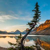 Fir trees lean over misty Bow Lake at sunrise in Banff National Park, Alberta Canada.  Behind are (L to R) Mount Andromache, Mount Hector,  Bow Peak, Bow Crow Peak and Crowfoot Mountain.