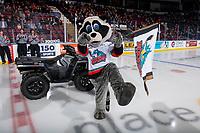 KELOWNA, BC - NOVEMBER 30: Rocky Raccoon, the mascot of the Kelowna Rockets hams it up on the ice against the Prince George Cougars at Prospera Place on November 30, 2019 in Kelowna, Canada. (Photo by Marissa Baecker/Shoot the Breeze)