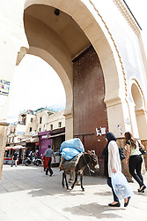 "Donkey at Bab Bou Jeloud, the ""Blue Gate"", entrance to the Fes al Bali medina, Fes, Morocco"