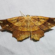 20190802 Moths