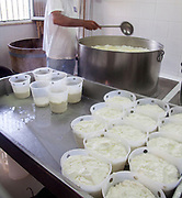 Making ricotta cheese in small scale dairy, Sicily, Italy