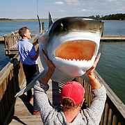 Jan Spoerri, of Jan Spoerri & CO., left, and Roby Braun, of Alpha Verus Ltd, right, carry a fiberglass tiger shark to the end of the dock to dry in the sun after being painted by Braun for the Port Royal Sound Foundation Maritime Center on October 30, 2014.  The maritime center opens on Saturday , Nov. 1, 2014.