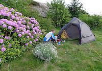 Camping by Rhododendron....Rhododendron is a genus of over 1000 species of woody plants in the heath family, most with showy flowers. It includes the plants known to gardeners as azaleas.....Rhododendron (også alperose, fra gresk: rhodos, «rose»; dendron, «tre») er en slekt i lyngfamilien. Det er en av de største slektene i planteriket. De fleste artene har fargerike blomster. Flere av artene er eviggrønne.
