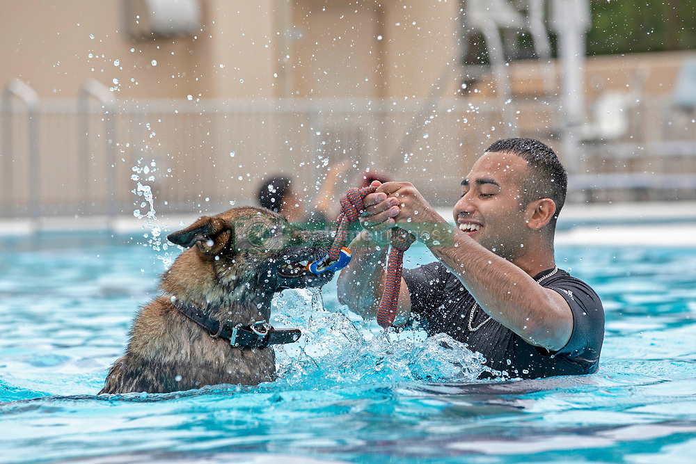Staff Sgt. Mario Hernandez, 374th Security Forces Squadron military working dog handler, and military working dog Demo play after a water-based aggression training at Yokota Air Base, Japan, Sept. 12, 2018. The water aggression training offers a unique opportunity for working dogs to become familiar with water. (U.S. Air Force photo by Yasuo Osakabe)