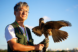 Desde 2009 Douglas Kajiwara, da empresa de falcoaria Hayabusa usa falcões e gaviões treinados para afastar e capturar aves capazes de se chocar contra os voos do Aeroporto Internacional Salgado Filho, em Porto Alegre. FOTO: Jefferson Bernardes/Preview.com