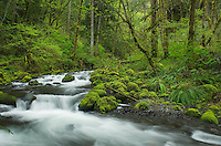Groton Creek, Columbia River Gorge National Scenic Area, Oregon
