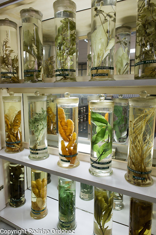Different types of plants and tubers are kept and displayed in the research and testing lab of the Martha Tilaar factory in East Jakarta, Indonesia, on July 2, 2015.