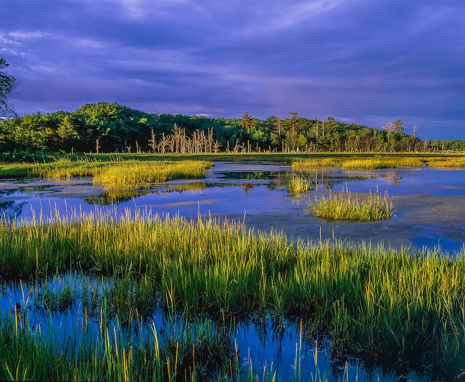 Scarborough Marsh Nature Center in summer, grasses, pm light, Scarborough, ME