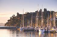 Sailboats docked in calm water marina at sunrise, Tiburon, Marin County, California