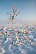 Foggy winter morning in farm field, Adams County, Colorado.