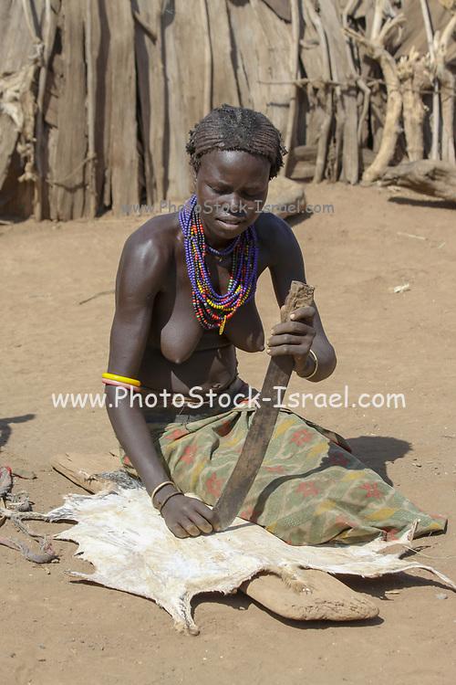 Daasanach Tribe Village woman curing animal skin to leather