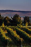 Northstar Vineyards