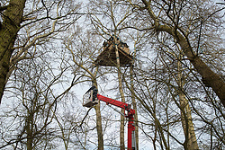 Steeple Claydon, UK. 23 February, 2021. A National Eviction Team bailiff acting on behalf of HS2 Ltd uses a cherry picker to begin to evict activists opposed to the HS2 high-speed rail link from tree houses in ancient woodland known as Poors Piece. The activists created the Poors Piece Conservation Project there in spring 2020 after having been invited to stay on the land by its owner, farmer Clive Higgins. Already, local village communities have been hugely impacted by HS2, with 550 acres of land seized including a large section of a nature reserve.