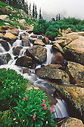 Stream and flowers in the Indian Peaks Wilderness of Colorado