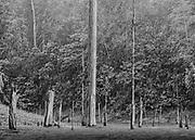Lac de retenue du barrage de Petit-Saut, Guyane, 2015.<br /> <br /> Pour répondre à la forte augmentation des besoins énergétiques de la Guyane au début des années 1980, le barrage de Petit-Saut est construit sur le fleuve Sinnamary et mis en service en 1994. Sa retenue d'eau s'étend sur 310 km². Compte tenu de la taille de la forêt à inonder, il n'a pas été procédé à la déforestation du site. Vingt ans après son ouverture le spectacle est apocalyptique. <br /> En dehors de l'hélicoptère, la traversée du lac en pirogue reste l'unique moyen de se rendre à Saint-Élie.