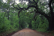Canopy Road, Tallahassee, Florida<br />