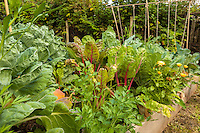 A variety of produce , including Swiss Chard, grows in raised beds in an organic garden.