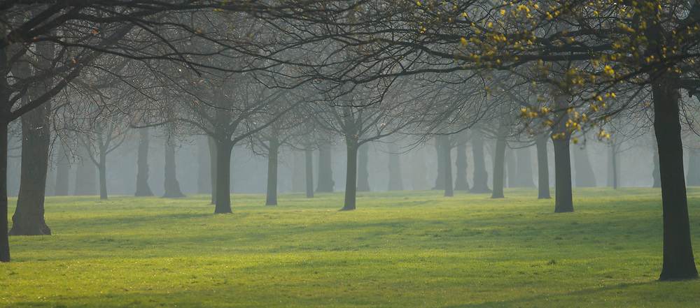 Londons Hyde Park with an evening mist settling in on the many beautiful trees and lush grass in springtime