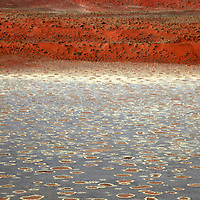 Africa, Namibia, Sossusvlei. Fairy Circles and red dunes of the Namib Rand.