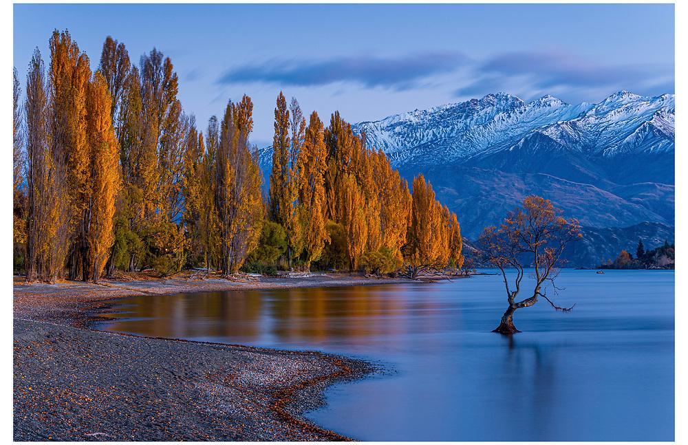 The Wanaka Tree,  Wanaka. Otago.