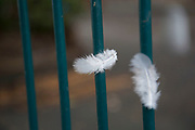 Two down feathers attached to some railings conveys a soft and hard, gentle and harsh vision in London, England, United Kingdom.