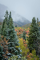 A dusting of snow covers the pines and other various trees as Fall colors shine through the storm.