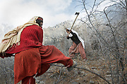 Zamrad Begum and Nasib Sultan cutting  wood (for cooking and heating) in Zor Abad, a winter pasture two hour walk from Hussaini village, across the Hunza valley riverbed. Gojal region.