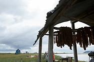 Louie Greens lax hänger på en ställning under tak vid familjens fiskestuga utanför Nome. <br /> Numer måste de kontrollera extra noga så att insekter inte lägger ägg i laxen. <br /> Alaska, USA<br /> <br /> Fotograf: Christina Sjögren<br /> <br /> Photographer: Christina Sjogren<br /> Copyright 2018, All Rights Reserved